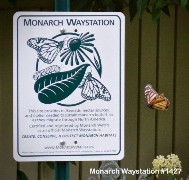 monarchwaystationwithmonarch