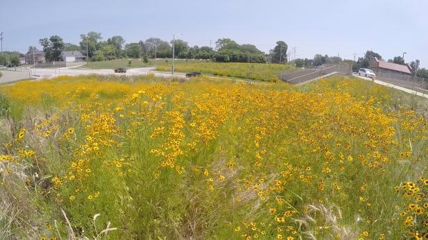Belmont Pollinator Garden 1