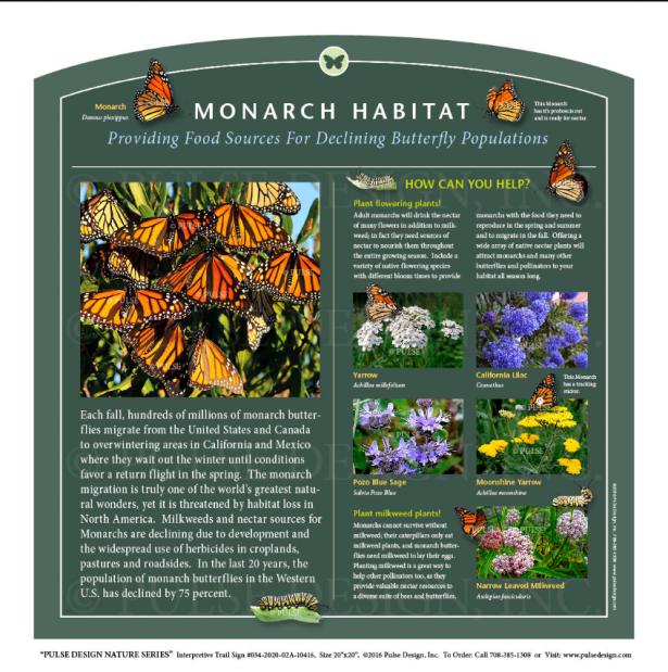 Belmont Pollinator Garden 4